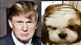 trump and dog